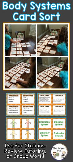Human Body Systems Card Sort. These cards are great for review, rotations, partner work, or independent study for your tactile learners.