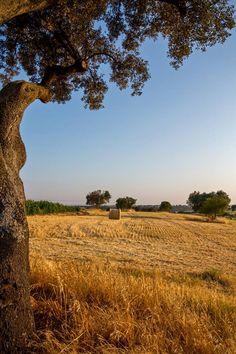 Alentejo - Portugal.  Fotografia de Luís Reininho