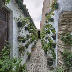 Patio de la calle Pozanco, 21.- Conserva los muros, ventanas y algunas puertas antiguas. La estructura es la típica de las casas de vecindad, adaptada de convento a viviendas situadas alrededor de los patios.