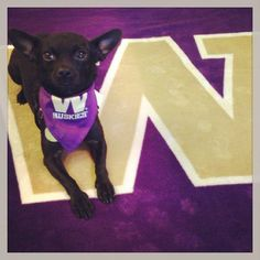 "W Day Photo Contest 2014: ""Martini the Dawg"" 