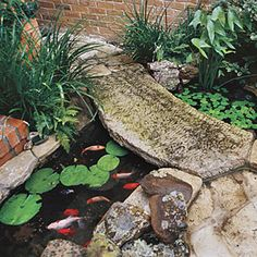 3 Courtyard Designs   Texas: Courtyard Goldfish Pool   SouthernLiving.com