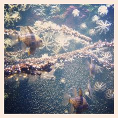 Melbourne aquarium 3