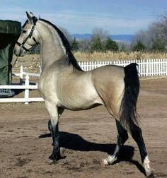 Photo: Nos cavalos encontramos beleza sem vaidade e nobreza sem arrogância!! Maravilhosoo!