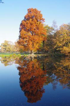 Parc de Schoppenwihr à Bennwihr (sortie Houssen / Colmar)