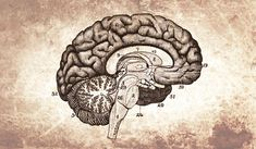 Here are 10 beneficial things about brain-based learning instruction which have helped teachers improve the education of many students immeasurably. Peer Learning, Student Centered Learning, Problem Based Learning, Inquiry Based Learning, Project Based Learning, Learning Activities, French Language Learning, Spanish Language, Teaching French