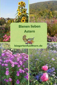 Autumn asters are a wonderful bee pasture in the garden. Black Forest Germany, Vintage Garden Decor, My Secret Garden, Bee Keeping, Garden Planning, Pretty Flowers, Compost, Flower Arrangements, Flora