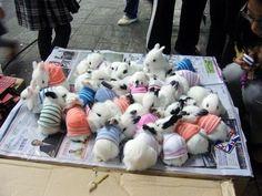 Bunnies in jumpers!