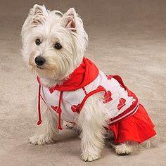 publicidade: A maioria das pessoas amam e tem um animal de estimação e um dos preferidos são os cachorros que são adoráveis e doceis, chegam a fazer parte da família. E com isso os mercados de acessórios pets vem crescendo grandiosamente e um dos acessórios mais procurados são as roupas para cachorro que são super …