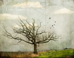 once and forever. Jamie Heiden.