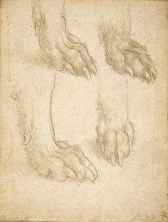 Studies of a Dog's Paw  Leonardo da Vinci