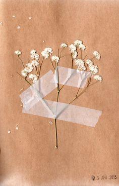 Ellen Jakeman // dried gypsophilias in my visual journal, 2015 Cream Aesthetic, Brown Aesthetic, Flower Aesthetic, Aesthetic Backgrounds, Aesthetic Iphone Wallpaper, Aesthetic Wallpapers, Fond Design, Collage Des Photos, Pastel Wallpaper