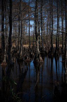 Big Cypress Bayou, Jefferson Texas