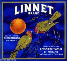 Upland / Ontario CA, Linnet Brand fruit crate label
