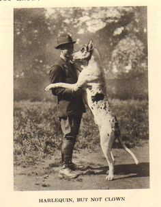 1931 Vintage Dog Print | Buy It Now $15 Harlequin Great Danes, My Big Love, Vintage Dog, Big Hugs, Gentle Giant, Old Dogs, Dog Photos, Doge, Best Dogs