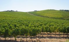 A Wine-Lover's Guide to Tuscany | Travel + Leisure