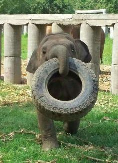 """""""Let's Play!"""", adorable e Baby Elephant. in crying thats so cute Cute Creatures, Beautiful Creatures, Animals Beautiful, Cute Baby Animals, Animals And Pets, Funny Animals, Wild Animals, Elephas Maximus, Save The Elephants"""