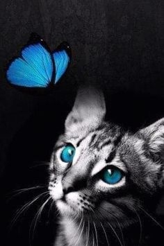 Blue BF and Kitten-Color Splash photo bf_cateyes-CS. Splash Photography, Cat Photography, Background For Photography, I Love Cats, Crazy Cats, Cute Cats, Beautiful Cats, Animals Beautiful, Cute Animals