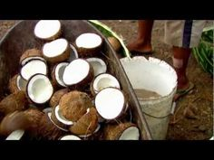 Sourcing our Community Trade Coconut Oil - The Body Shop Coconut Oil Uses, Nail Spa, Loving Your Body, Beauty Industry, The Body Shop, Vegetarian Recipes, Fair Trade, Organic, Fruit