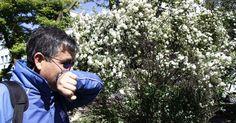 Más de 6 meses con síntomas deben soportar los alérgicos al polen