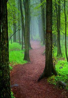 lindo bosque