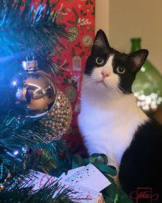 Christmas Cats, Instagram Accounts, Animals, Animais, Animales, Animaux, Animal, Dieren