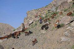 (IMAGENES) 2 MAY 2014 | AFGANISTAN > DESLAVE | Afganistan'da büyük facia, 2 bin kişiden haber yok