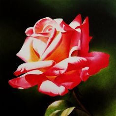 Summer Glow Rose - Oil, original painting by artist Jacqueline ...