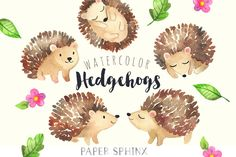 Baby Hedgehog Watercolor Clipart - Hand painted printables - DIY greeting cards, Scrapbook, Digital Children's Clip Art, Nursery by PaperSphinx on Etsy https://www.etsy.com/listing/266769005/baby-hedgehog-watercolor-clipart-hand