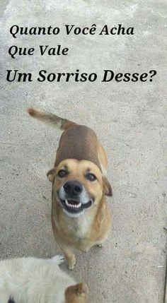VALE TUDO TUDO TUDOOO!! <3 #petmeupet #amoanimais #cachorro