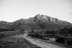 Wedding Photographers' Page and Holmes capture Jan and Phillipa's engagement shoot into the Stellenbosch mountains and fynbos fields.