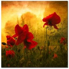 @Overstock - This alluring gallery-wrapped canvas art entitled 'Red for Love' features a gorgeous poppy garden in autumn tones. This ready-to-hang art piece measures 18 inches high x 18 inches wide and makes a lovely addition to a small wall space.http://www.overstock.com/Home-Garden/Philippe-Sainte-Laudy-Red-for-Love-Canvas-Art/5606580/product.html?CID=214117 $56.99