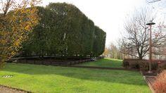 Exterior Maine, Sidewalk, Exterior, Plants, Side Walkway, Walkway, Plant, Outdoor Rooms, Walkways