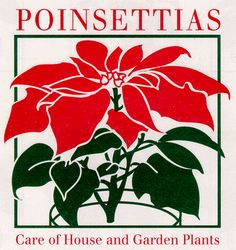 Poinsettias: Care of House and Garden Plants