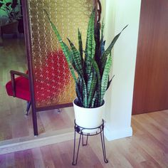 My mid-century inspired planter from Home Depot. #midcentury #retro #modern #vintage