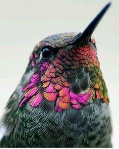 Bird Photo by ©Thy Bun #OurHeavenPlanet