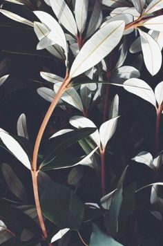 Plants, leaves, natural beauty, simple home decoration, greenery, moody plants.