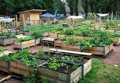 Ein Himmelbeet auf Bodenhöhe - zu Besuch im ersten Weddinger Urban-Gardening-Projekt.