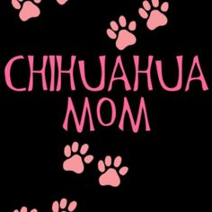 Love my Chihuahua photos of puppies pictures of dog breeds cute dog photos dog p. Chihuahua Quotes, Cute Chihuahua, Chihuahua Puppies, Dog Quotes, Chihuahuas, Best Dog Photos, Funny Dog Photos, Puppy Pictures, Training Your Dog