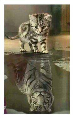 think big ~ kitten