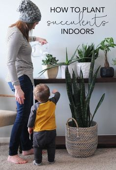 How to Plant Succulents Indoors   How to Plant Indoor Succulents   My Breezy Room
