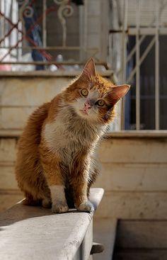 Wondering cat   Flickr - Photo Sharing!