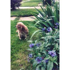 My dog lilly #dog #happy