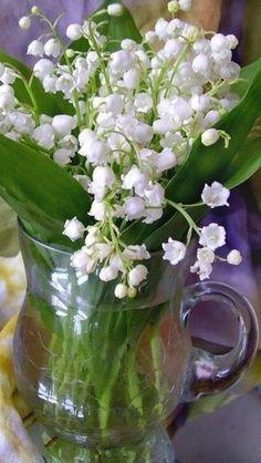 Lindas - Muguet du Bois - Lilly of the Valley Beautiful Flower Arrangements, Floral Arrangements, Beautiful Roses, Beautiful Flowers, Flowers For Algernon, Lily Of The Valley Flowers, Spring Photography, Floral Backdrop, Birth Flowers