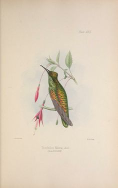 Illustrations of the birds of Jamaica / - Biodiversity Heritage Library, 1849