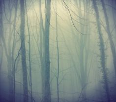 the forest on Behance.