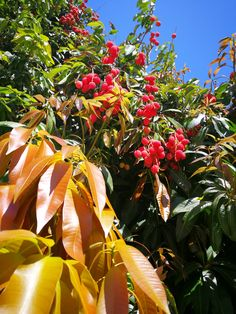 Canario, Plant Leaves, Plants, Maspalomas, Tree Structure, Photo Illustration, Planters, Plant, Planting