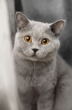 Cat by Angelina Chestnykh on 500px