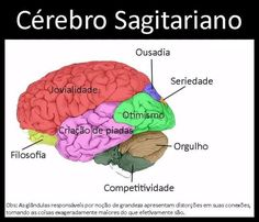 O Cérebro Sagitariano