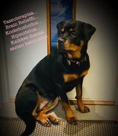 Helin Huilimossa voit tavata myös tassuterapeutti, Nuukkiksen. Brain, Dogs, Animals, The Brain, Animales, Animaux, Pet Dogs, Doggies, Animal