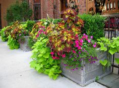 Annual flower pots add bright colors and lush greens to enhance the landscaping of a commercial business.